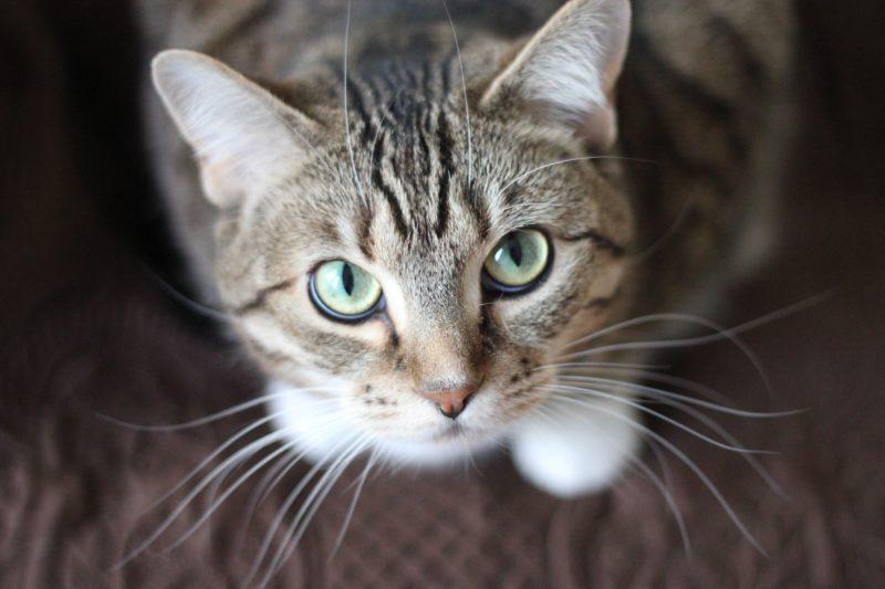 gros plan d'un chat