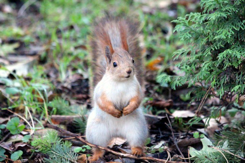 gros plan d'un écureuil