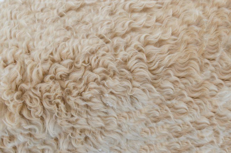 laine blanche