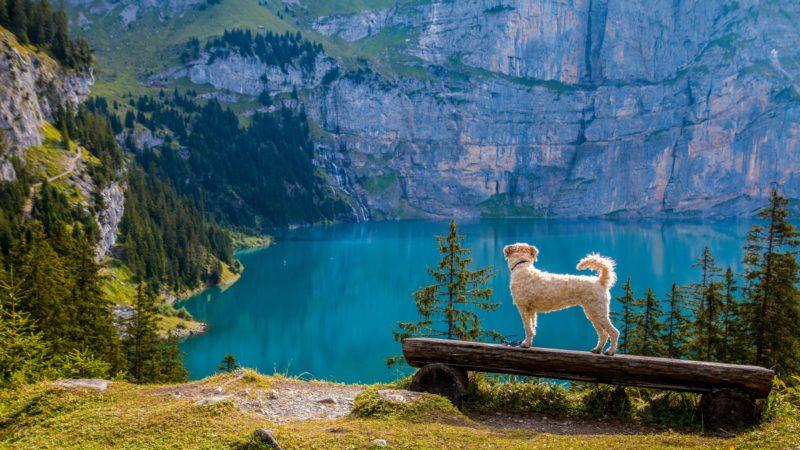 chien et lac de montagne