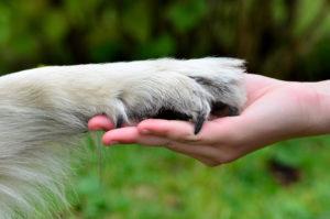 gros plan d'une patte sur une main