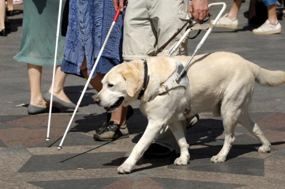 chien d'assistance