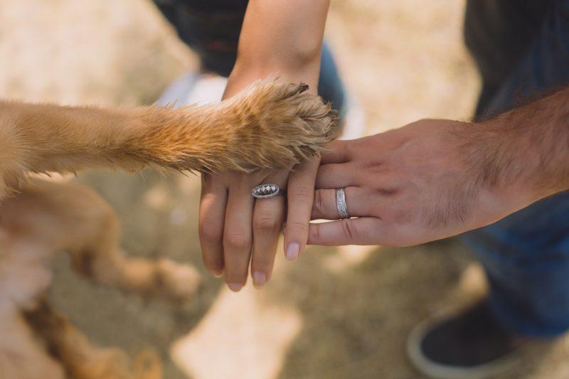 patte de chien mains de maître