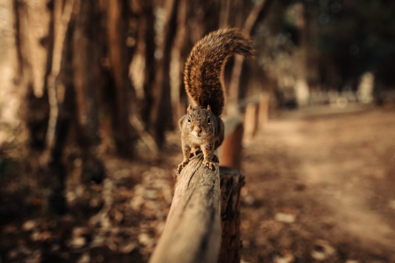 écureuil sur un garde corps