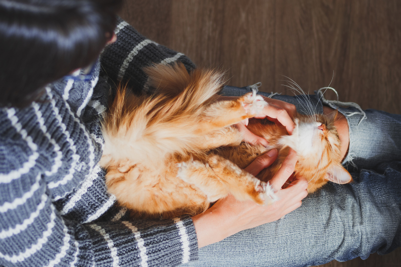 Les animaux de compagnie peuvent-ils transmettre le COVID?